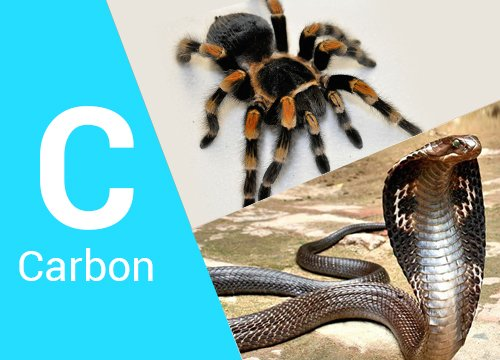 Group Study on Carbon, Spider & Snake Remedies by Dr. Kishore Mehta